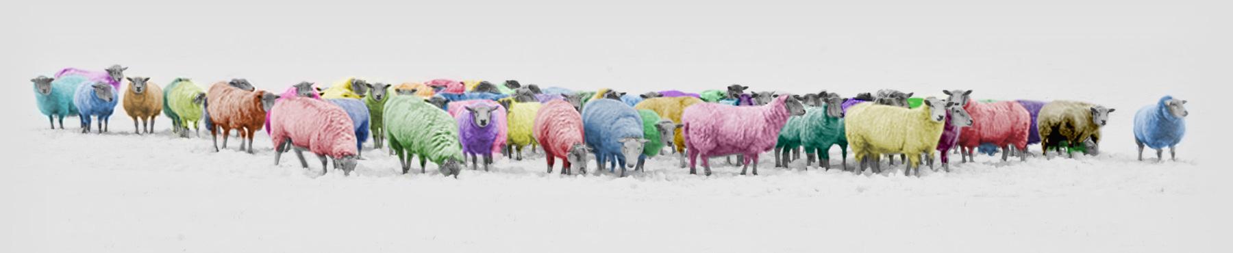 Pantone Sheep